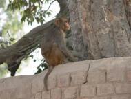 A Wise Old Monkey
