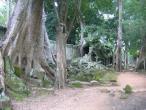 Ta Promph temple 019.jpg